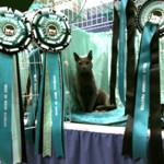 Overall Best in Show- rosettes!